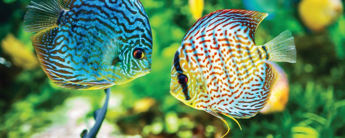 Serwis Akwarystyczny Informacje o rybach i roślinach akwariowych Zakładanie akwarium słodkowodnego